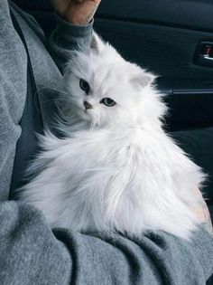 These cute kittens will make you amazed. Cute Kittens, Pretty Cats, Beautiful Cats, Animals Beautiful, Pretty Kitty, Cute Baby Animals, Animals And Pets, Funny Animals, Wild Animals