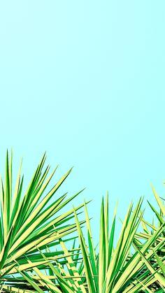 Palms iPhone wallpaper