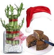 Christmas Lucky Plant Gift