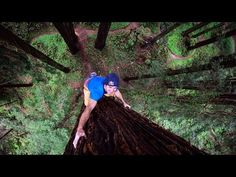 Giant Ascent: Chris Sharma Free Climbs Huge Redwood w/ Help of Scientists - YouTube