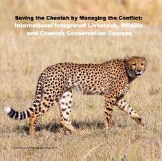 Livestock Guarding Dog Program Cheetah Conservation Fund www.cheetah.org