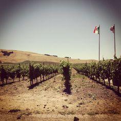 Robledo Family Winery #Sonoma #travel #winecountry #vineyard