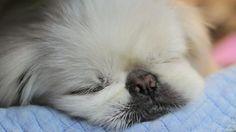Spudgy sleeping. He is so cute