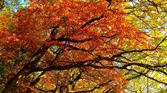 Autumn Colors. Autumn, Colors, Plants, Fall Season, Fall, Colour, Plant, Color, Planets