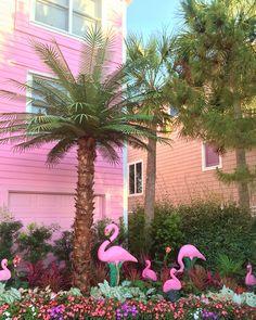 Flamingo House Isle of Palms