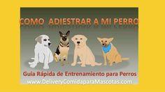 Guia para entrenar perros - Adiestramiento canino