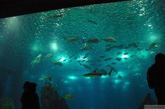 """Największe oceanarium w Europie, jedno z lizbońskich """"must see"""" - odkryj oceany światowe na wyciągnięcie ręki! Więcej info tutaj: http://infolizbona.pl/?p=1907"""