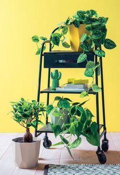 Green lab Truffaut - Des plantes à tous les étages