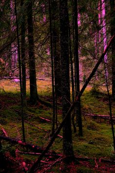 Pink and green by Pasi Leppänen on 500px