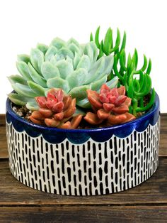 Scalloped Succulent Kit by Source Succulents at Gilt
