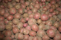 2,800 pounds of new potatoes just arrived this afternoon from the East Texas Food Bank Garden in south Tyler. Anyone have some great recipes for them?