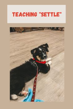 Leash Training, Puppy Training Tips, Training Your Dog, Relaxed Dog, Dog Cots, Group Of Dogs, Getting A Puppy, Dogs And Puppies, Doggies