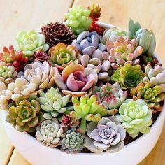 Succulent Dreamers #containergardeningideassucculents