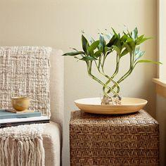 Ideas para una decoración ecológica.   Decoración Interiores