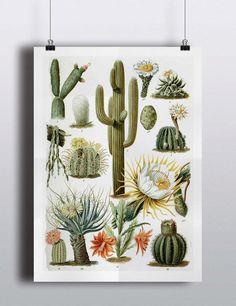 Antique 1800s Cactus Chart Poster Art Print di TheBlackVinyl