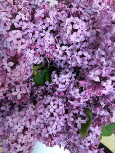 Lilacs -therecipenut
