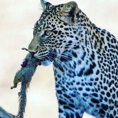 #Leopard #Squirrel