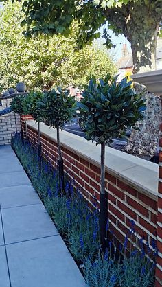 Red brick garden wall with porcelain paving and bay and lavender London Garden Design Plans, Backyard Garden Design, Small Garden Design, Front Garden Ideas Driveway, Driveway Landscaping, Brick Wall Gardens, Brick Garden, Small Front Gardens, Small Backyard Gardens