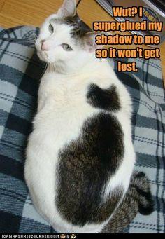 kitty shadow