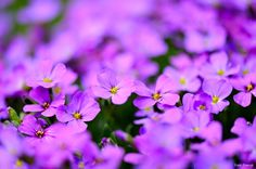 """spring flowers 