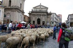 La Transumanza sulle vie degli antichi pastori: il programma