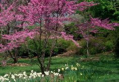 azaela  http://www.lowes.com/creative-ideas/gardening-and-outdoor/ornamental-trees-and-shrubs/article