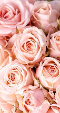 #floralwallpaper #iphonewallpaper #flower #pretty Hd Wallpaper Iphone, Wallpaper For Your Phone, Rose Wallpaper, Mobile Wallpaper, Phone Backgrounds, Rose Background, Peach Flowers, Peach Colors, Love Rose