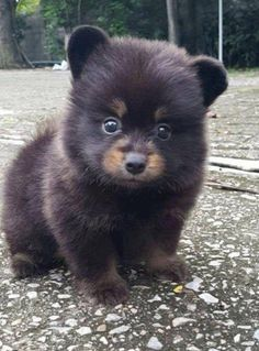 Animals 🙈 - Animals, animals wild, animals funny, animals cutest, animals and pets Baby Animals Super Cute, Cute Little Animals, Cute Funny Animals, Baby Animals Pictures, Cute Animal Pictures, Animals And Pets, Funny Pictures, Fluffy Animals, Dog Pictures