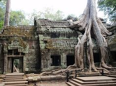 Siem Reap, Cambodia - Ta Prohm Temple.  My Fav Country.