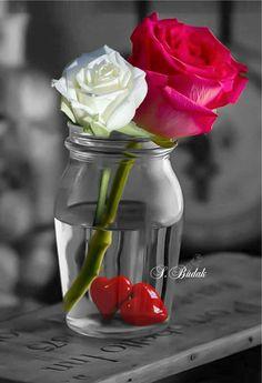 ♥️Unsere Herzen passen genauso gut zusammen, wie unsere beiden Rosen♥️ Good Morning Beautiful Flowers, Beautiful Rose Flowers, Exotic Flowers, My Flower, Pretty Flowers, Flower Art, Animated Love Images, Love You Images, Color Splash