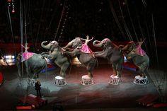 Circus elephants by Django on flickr