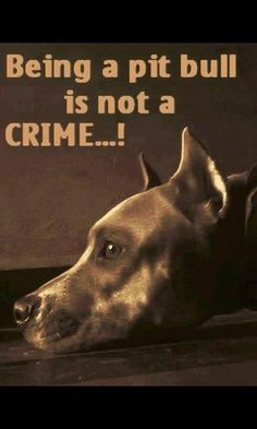 Once this attitude was extended to German Shepherds, to Rottweilers, to Dobermen. Blame the irresponsible, cruel humans. Punish dog fighters (humans) and dog fight spectators and profiteers. The dogs are innocent victims of violence and abusive treatment.