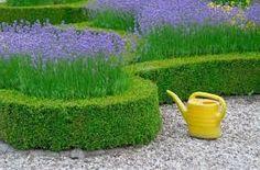 Znalezione obrazy dla zapytania lawenda w ogrodzie Hard Landscaping Ideas, Garden Landscaping, Buxus Sempervirens, Plant Projects, Formal Gardens, Garden Boxes, Green Garden, Hedges, Garden Inspiration