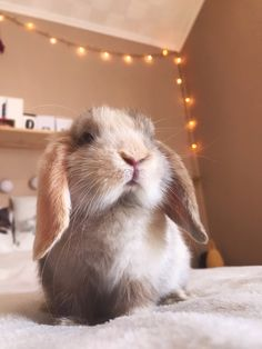 Cute Animal Photos, Cute Photos, Baby Animals, Cute Animals, Beautiful Rabbit, House Rabbit, Puppies And Kitties, Bunny Rabbits, Star Butterfly