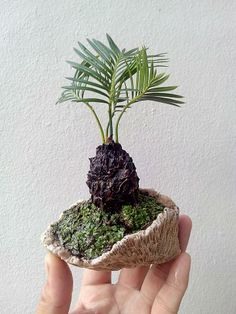 Not really a bonsai I guess but really cute
