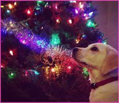 Bridgit Mendler Names Her New Puppy Nala