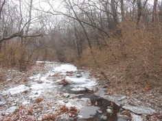 Flat Branch Creek Picture a Day, Tunnel of Love, December 8th 2013 - Welcome to the first snowfall of the season!