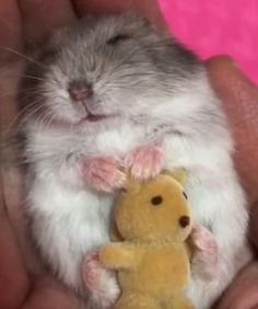 The Sweetest Hamster Lullaby