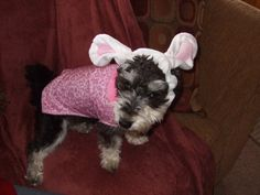 Rylee, submission by Tim S. Hoppy Easter, Submission, Best Friends, Dogs, Animals, Beat Friends, Bestfriends, Animales, Animaux