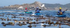 Ocean kayaking in Mendocino County! Mendocino County, Giant Tree, Famous Landmarks, North Coast, Sonoma County, Northern California, Outdoor Activities, State Parks, Kayaking