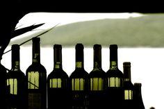 Lucid bottles @eduardoxavierph