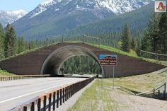 Amazing Funny Images and Nature Pictures: Wildlife Bridge - Montana USA