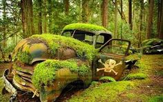 ~Natures art...moss and rust
