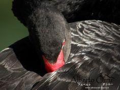 Foto Alberto Orrù fotografo Cagliari Animali (41).jpg (533×400)