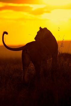 *African Sunset (by Margot Raggett)