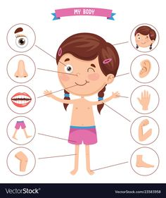 Pin by lili on cliparto human body, kids education, teaching kids. Body Parts Preschool Activities, Body Preschool, Human Body Activities, Preschool Learning Activities, Preschool Worksheets, Toddler Activities, Teaching Kids, Kids Learning, Listening Activities
