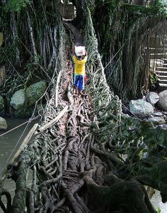 The Root Bridge. This unique bridge came from the root trees. Located at painan, West Sumatra Indonesia
