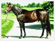 Grindstone- Unbridled- Buzz My Bell By Drone 6 Starts 3 Wins 2 Seconds. Won La. Retired After Ky. Derby Due To Bone Chips In Leg. All The Pretty Horses, Beautiful Horses, Animals Beautiful, Kentucky Derby, Derby Horse, Derby Winners, Sport Of Kings, Thoroughbred Horse, Racehorse