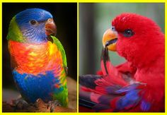 "Parrots of an ""other"" World"