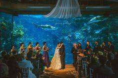 Suzanne & Mike's Florida Aquarium Wedding | Your Story By Us – Destination Wedding Photographers